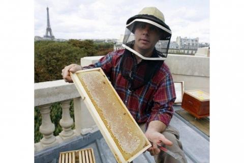 Sự sống sót kỳ diệu của đàn ong 200.000 con của Nhà thờ Đức Bà